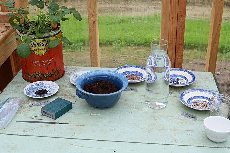Как подготовить семена к посадке?