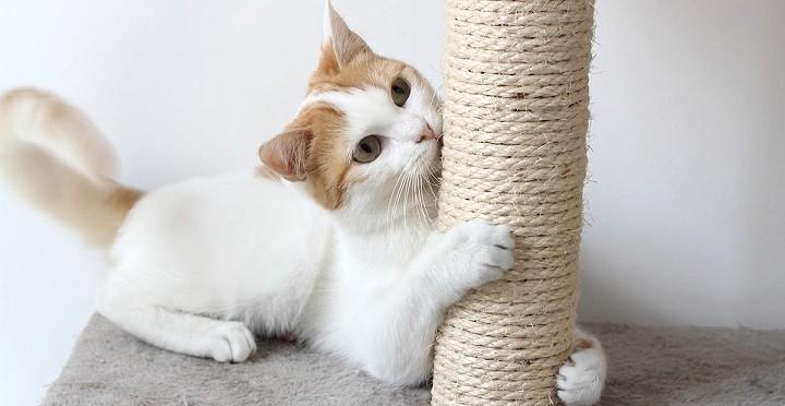 Если кошка царапает мебель что делать?