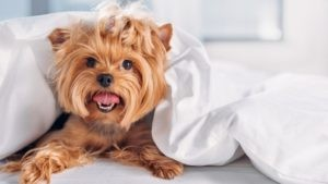 Польза собачей шерсти