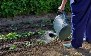 Чем нужно заниматься дачникам и огородникам в июле?