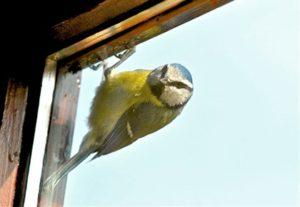 Птица стучит в окно хорошо или плохо?